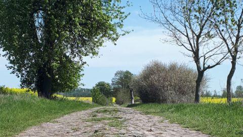 Kopfsteinpflasterweg auf der Tour Demmin-Verchen-Demmin