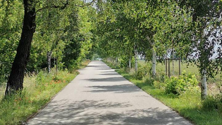 Lindenallee bei Sommersdorf